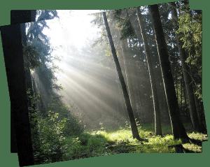 naturbestattung_reich_bestattung